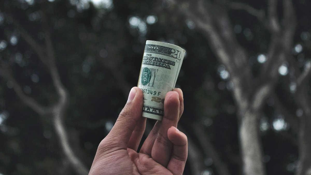 dinero en un bosque