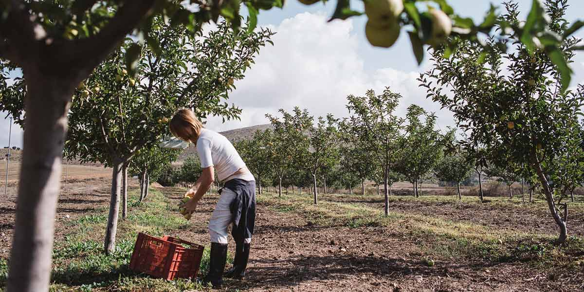 Agricultura Orgánica Regenerativa en la Finca La Junquera: Activismo a través de la agricultura