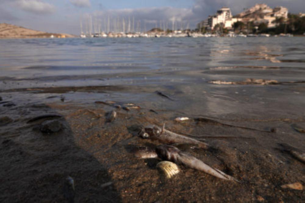Greenpeace insiste en que se persiga penalmente a quienes han matado al Mar Menor